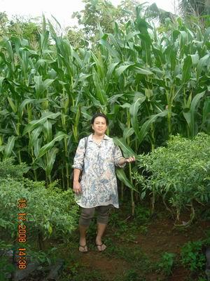 Bukti-bukti nyata dari penggunaan TGH pada pertanian dan perkebunan di ...